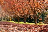 Autumn street row — Stock Photo