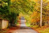 Autumn view street — Stock Photo