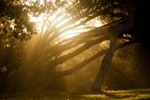 The magic forest at sunset — Stock Photo