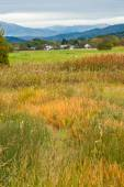 Grass field in rural Canada — Photo