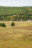Grass field in rural Canada — Stock Photo