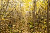 Inside the forest at autumn — Stock Photo