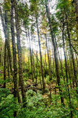 The green and lush forest — Stock Photo