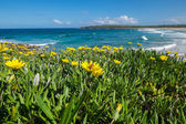 Wild flowers field next to the ocean — Stock Photo