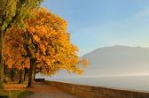 Autumn at Geneva lake, Switzerland — Stock Photo