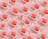 Backround with roses — Stock Photo