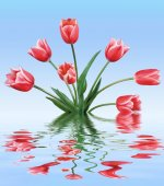 Red tulips in water — Stock Photo