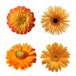 Selection of Various Flowers Isolated on White Background — Stock Photo #64280327