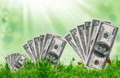 Green grass on the green background and sunlight — Stock Photo