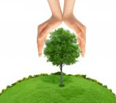 Concept of human hand protecting green tree. metaphor to nature, — Stock Photo