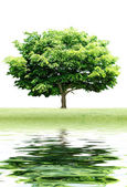 Alone Green Tree over white background with reflection — Stock Photo