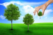 Scene of the hand plant tree on green grass. Ecology concept — Stock Photo
