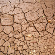 Parched river bed three — Stock Photo #53893729