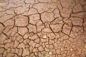 Parched river bed three — Stock Photo
