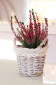 Pink heathers in basket — Foto Stock