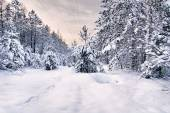 Winter in the woods — Stock Photo
