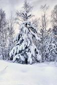 Snowy christmas trees — Stock Photo