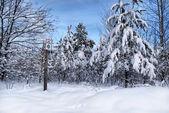 Snowy  trees in winter — Stock Photo