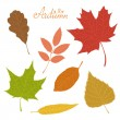 Set of veined autumn leaves isolated on white background. — Stock Vector #53835609