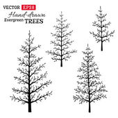 Set of hand-drawn evergreen trees.  — Stock Vector