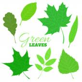 Set of veined green leaves isolated on white background. — Stock Vector
