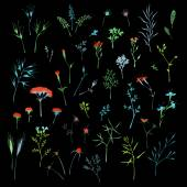 Vector set of floral design elements on black background. — Stock Vector