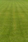 Greengrass — Zdjęcie stockowe