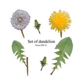 Set of flowers, buds, leaves and dandelion seeds on an isolated background — Stock Vector