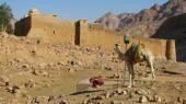 Klasztor świętej katarzyny, synaj, egipt — Zdjęcie stockowe