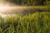 утро в берега трава — Стоковое фото