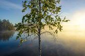 Hazy morning by the lake — Stock Photo