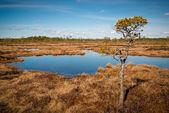 Swamp in april — Stock fotografie