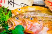 Fresh Fish Closeup — Stock Photo