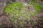 Old wall with fern and tropical plants — Stock Photo