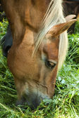 Пастбище лошади — Стоковое фото