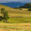 Steppe mountains tree — Stock Photo #55000075