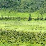 Mountains meadows bushes — Stock Photo #55004861
