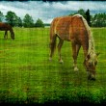 Horses grazing grunge — Stock Photo #55005861