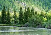 River Mountains Foresr — Стоковое фото