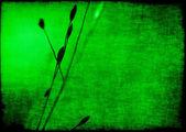 Plant vintage  background — Stock Photo