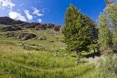 Rocks meadow stones — Stock Photo