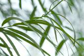 Green willow foliage — Foto Stock