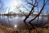 Trees flood river — Fotografia Stock