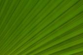 Fundo verde — Foto Stock