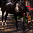 Brown stallion. Portrait of a sports brown horse. Riding. Thoroughbred. Beautiful — Stock Photo #64698297
