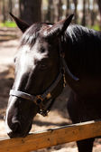 Brown stallion. Portrait of a sports brown horse. Riding. Thoroughbred. Beautiful — Stock Photo