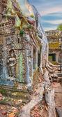 Ta Prohm Temple ancient tree roots, Angkor  — Stock Photo