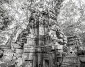 塔普伦寺古树根,吴哥 — 图库照片