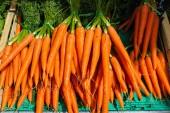 Bright orange carrot — Foto de Stock