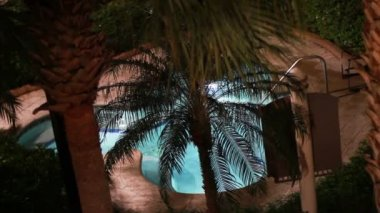 Pool, Palm Trees — Stock Video
